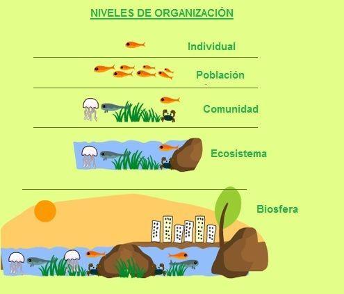 Niveles De Organizacion Organizacion De La Materia Ciencias De La Naturaleza Formas De Organizacion