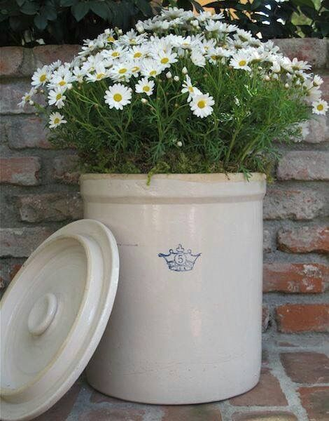 Daisies blooming in a crock pot, by The Electric Farmhouse