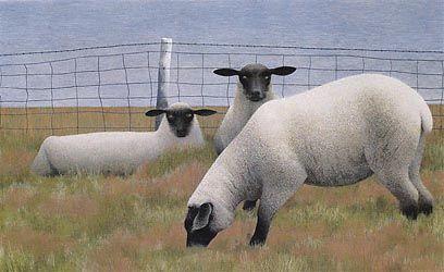 Three Sheep, 1954