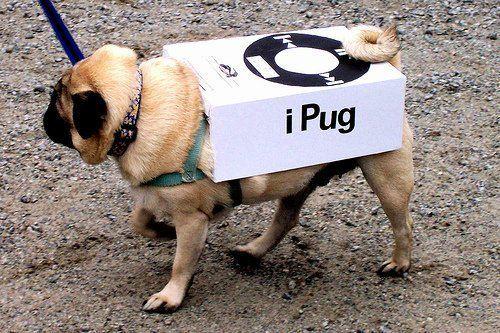 Google Image Result for http://images2.fanpop.com/image/photos/13400000/pugs-funny-pugs-13451969-500-333.jpg