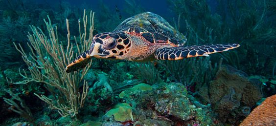 St. Vincent and the Grenadines Dive Travel Guide | Bluewater Dive Travel
