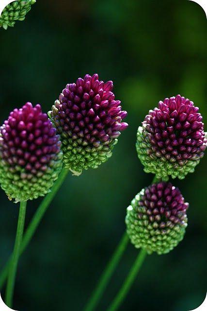Rose-violet et vert ( ou fruits des bois/ vert olive/blanc)