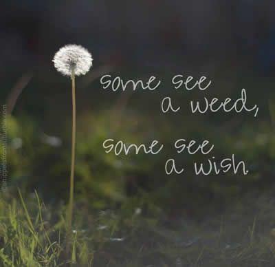 Make a wish!: