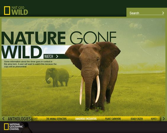 """National Geographic """"Wild""""  Brand Exploration by Bobby Ghoshal, via Behance"""