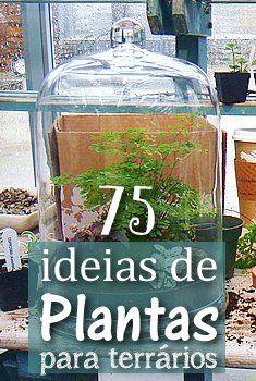 75 ideias de plantas para terr rios terr rio suculentas - Plantas para terrarios ...
