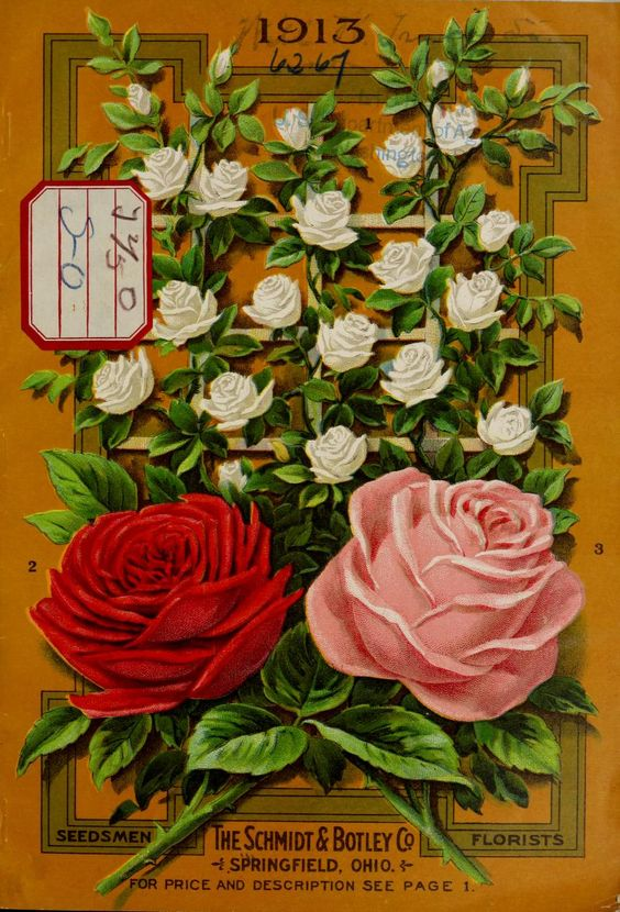 Schmidt & Botley Co., seedsmen and florists Catalogue -1913 - Roses
