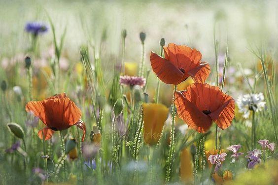 eda11y:  The Meadow by JackyParker