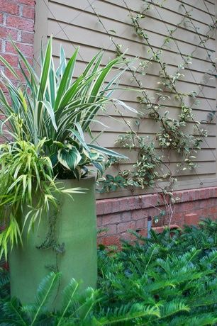 Traditional Landscape/Yard with Exterior brick wall, Paint, Outdoor plants