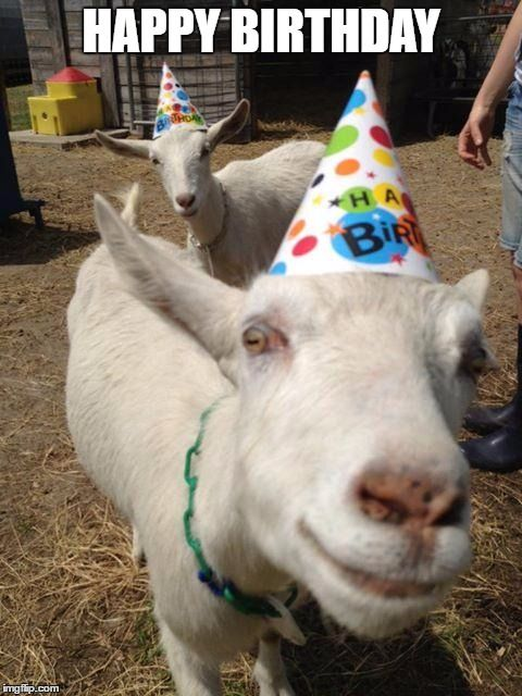 Image Result For Search For Birthday Memes With Photos Of Goats Happy Birthday Goat Birthday Meme Funny Birthday Meme
