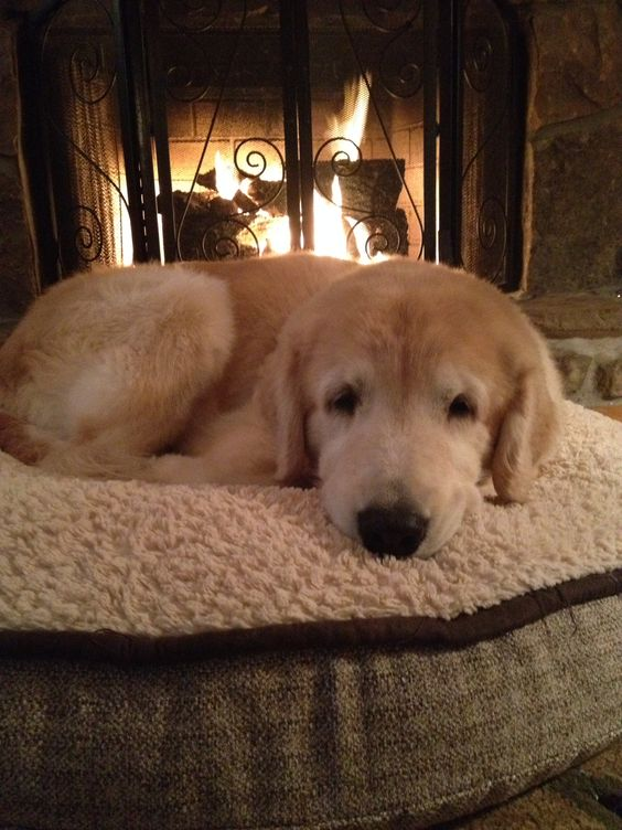 Happiness By A Warm Fire I Love Dogs Pinterest