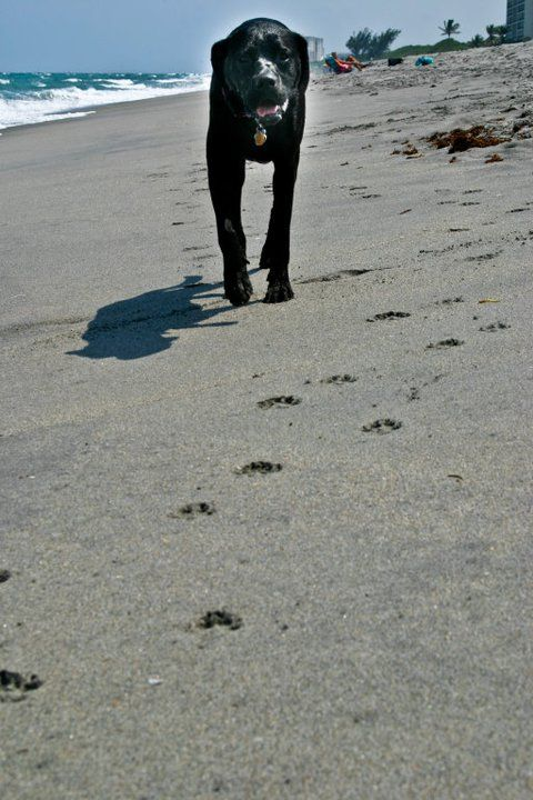 Just a walk on the beach..