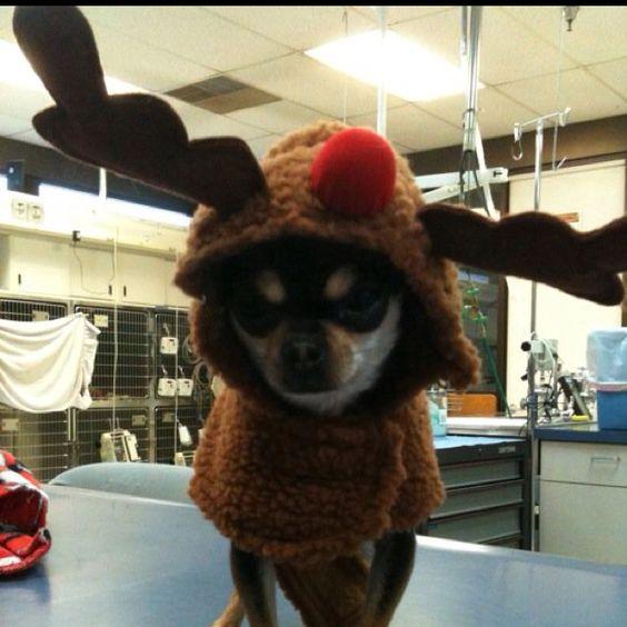 Sophie the reindeer..:)
