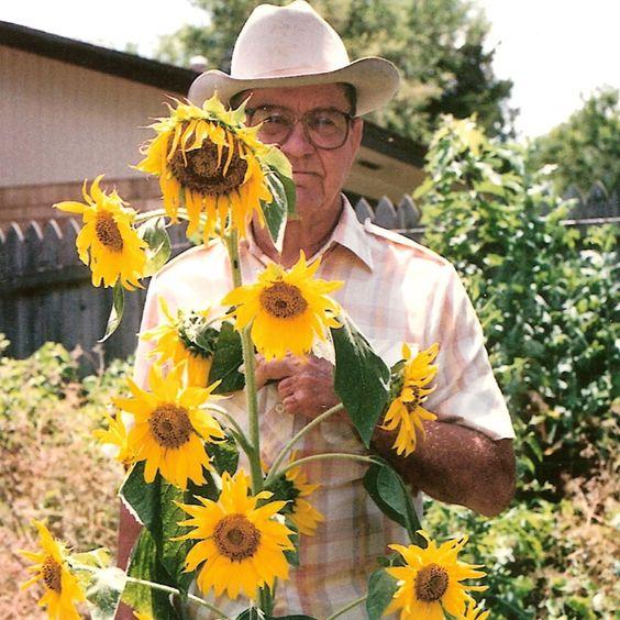 My grandpa grew these beautiful sunflowers!!