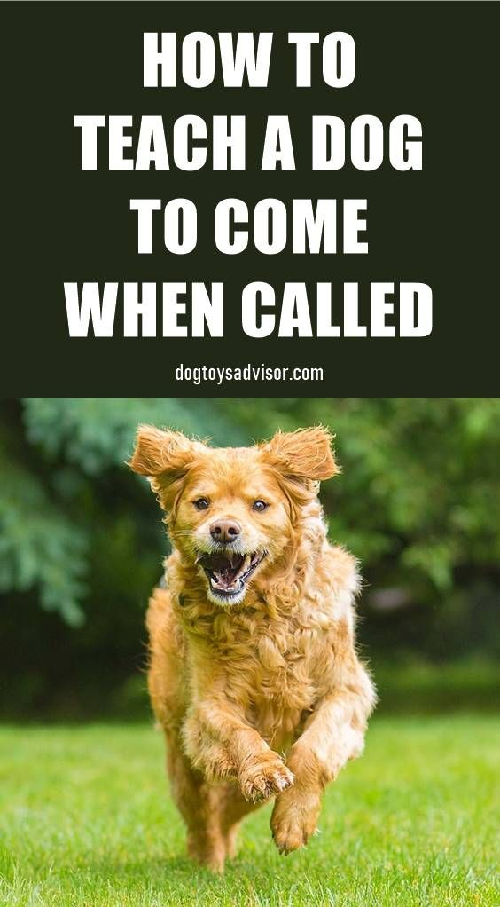 Does Your Dog Come Every Time You Call Him Teaching Your Dog To