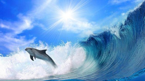 vlna, dolphin