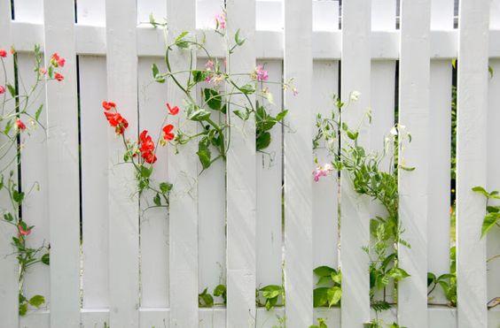 Hàng rào trắng là lựa chọn tối ưu và dễ áp dụng nhất dành cho tất cả trong vòng 10 phút hòn non bộ.