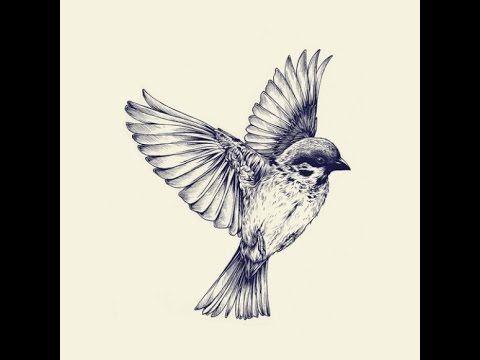 كيفية رسم طائر تعلم رسم العصفور How To Draw A Bird Youtube Bird Drawings Birds Tattoo Sparrow Tattoo