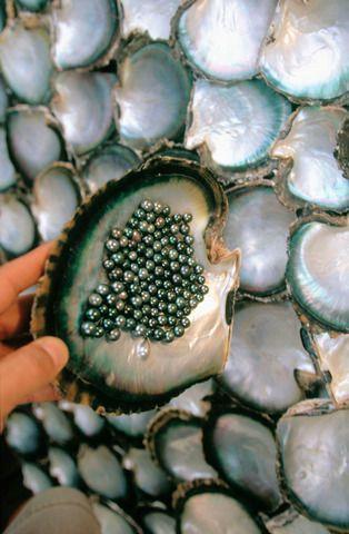 Black Pearl Farming, Tiki Village, Moorea, French Polynesia