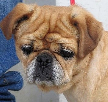 Adopt Honey On Petfinder Animal Shelter Humane Society Help Homeless Pets