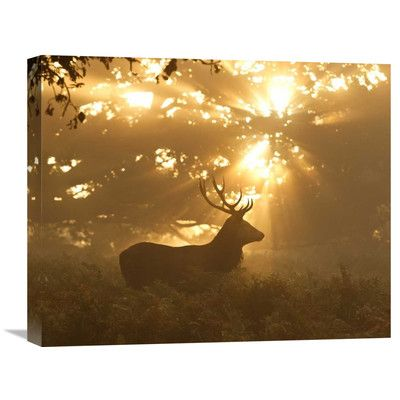Global Gallery 'Ghost Of The Forest' by Greg Morgan Photographic Print on Wrapped Canvas Size: 1