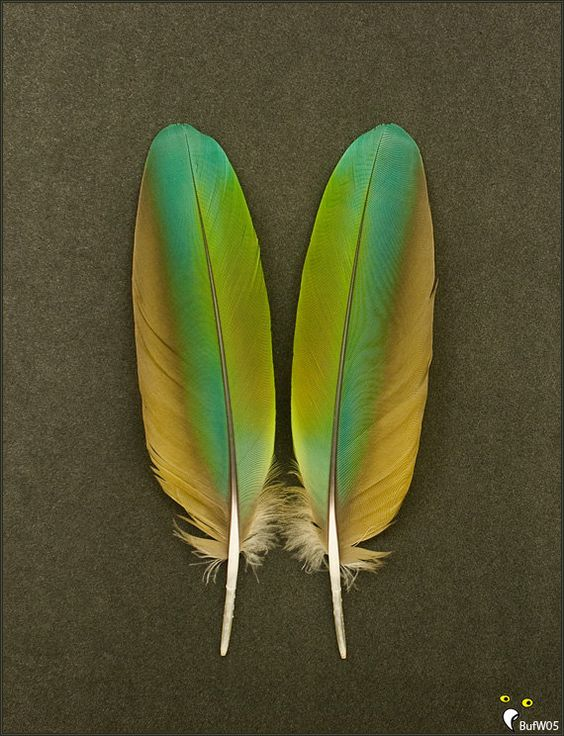 Macaw Parrot Feathers