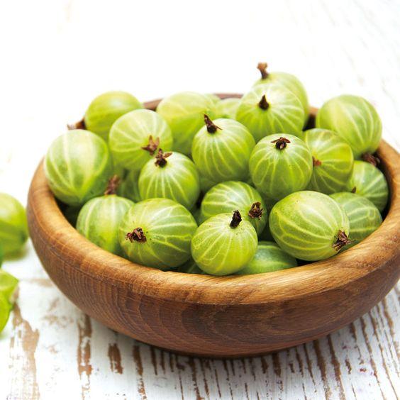 Stachelbeere 'Invicta' gelb-grün jetzt günstig in Ihrem MEIN SCHÖNER GARTEN - Gartencenter schnell und bequem online bestellen.