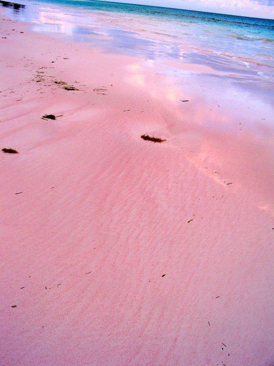 Pink beaches bahamas