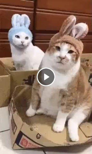 O gatos virarão coelhos.