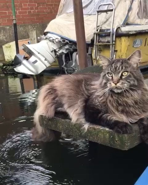 Louis Wildlife On Instagram Happy Tail Fishing Everyone Cutie Pets Animals Kitty Kisses