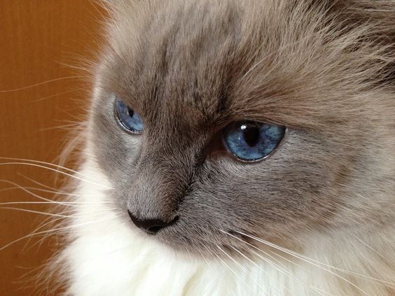 Little Princess Filofee of the Snow Diamond (blue mitted)