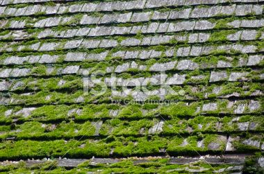 Shingled Roof with Moss Royalty Free Stock Photo