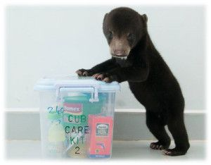 In September subscriptions will provide Cub Care packs for rescued bear cubs via Free the Bears.