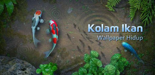 530 Wallpaper Ikan Bergerak Untuk Hp Android Hd Terbaru Taman Air Kolam Ikan Ikan Koi