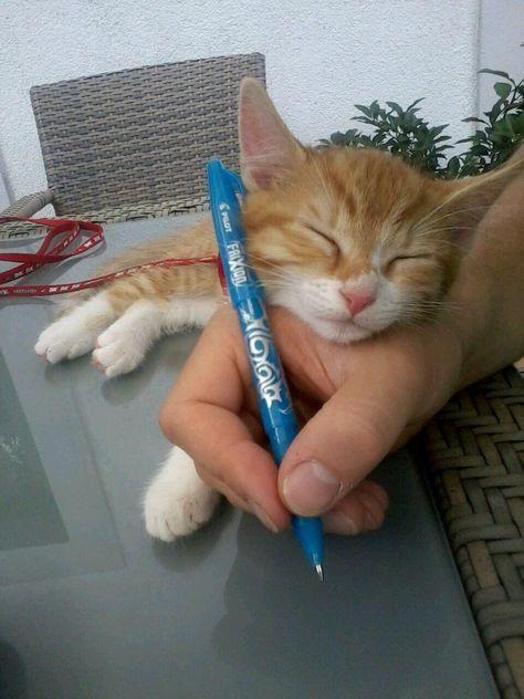 Arthur ist es egal, ob du etwas aufschreiben willst, er möchte gekuschelt werden ... - #Arthur #aufschreiben #du #egal #er #es #Etwas #gekuschelt #ist #möchte #ob #werden #willst