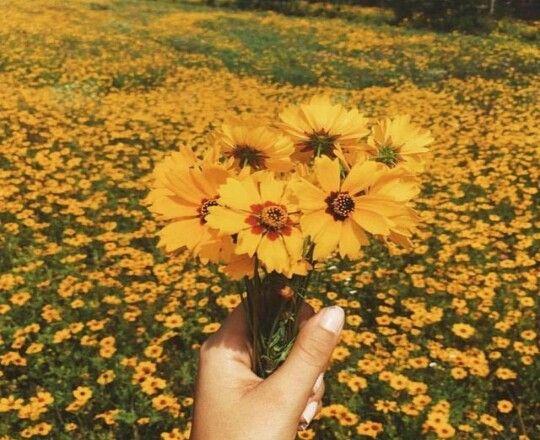 Yellow Aesthetic Flower Landscapes Field Fotografii Fonov Naturalnyj Ottenki Zelenogo
