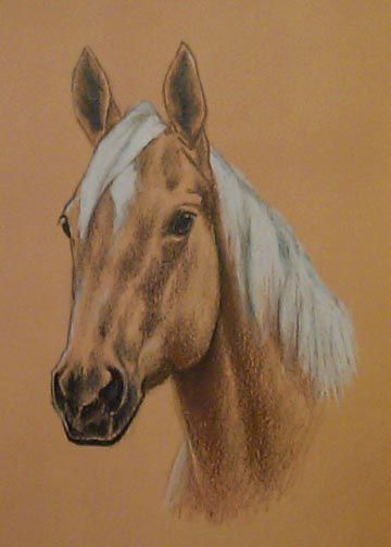 Quarter Horse Head drawing | Completed Commissions-HORSES ...