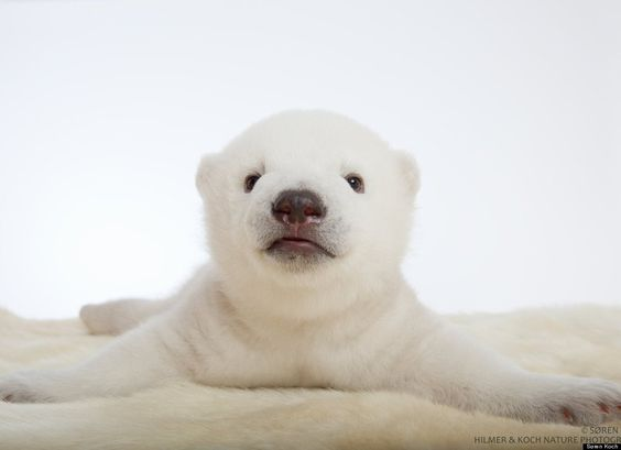 Polar Bear Pictures: Siku The Cub Still Warms Our Hearts