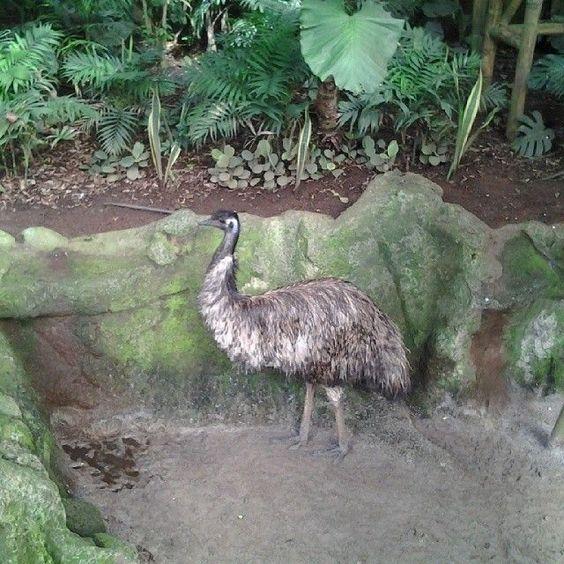 Loro Parque, #Tenerife