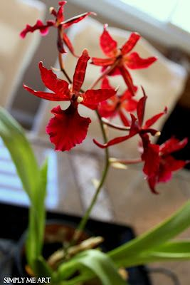 Orchid~