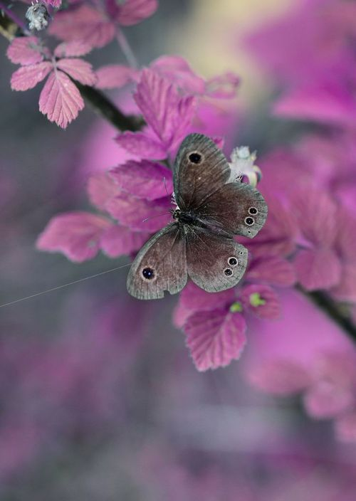 Butterfly (By Wang Feng) / ~Spring~