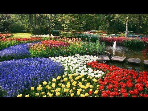 7cbde956f9f3a164c118dbe84b105d09 - Tours From Amsterdam To Keukenhof Gardens