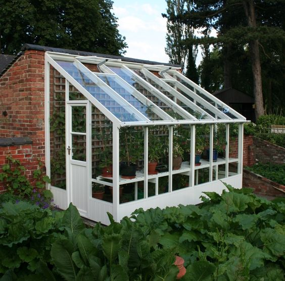 Swallow Dove Lean to Lily White; smart idea to include the trellis against the wall to increase growing area.