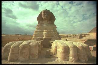 Front View Sphinx showing paws