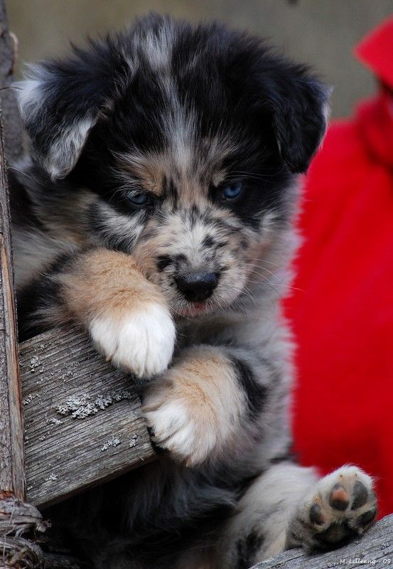 Skogstrollets 12 Wanagi Akayake Dogs Pinterest