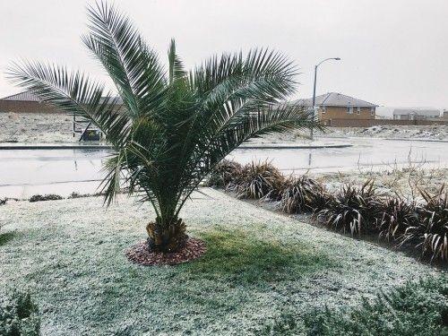 5 Winterharte Palmen Fur Nachhaltiges Gartengrun Fresh Ideen Fur Das Interieur Dekoration Und Landschaft Winterharte Pflanzen Garten Palmen Garten Winterharte Palmen