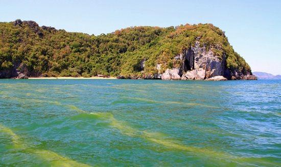 Há três tipos de algas associadas às marés vermelhas - � Microsoft