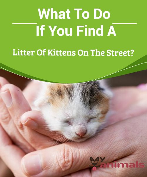 What To Do If You Find A Litter Of Kittens On The Street First You Have To Wait Until Their Mother Appears While They R Kittens Kitten Care Newborn Animals