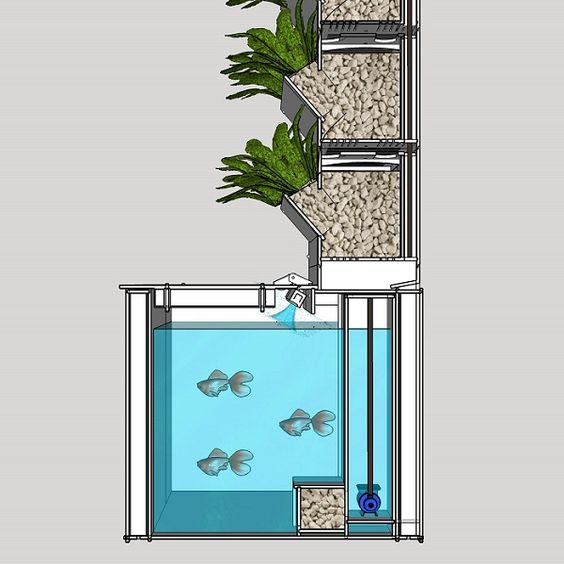Aquaponic garden systems use fish feces as natural for Fish used in aquaponics