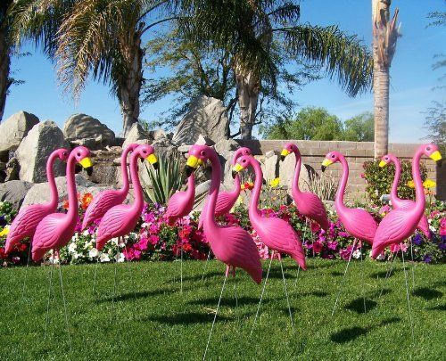 Image result for Florida's flock of pink flamingos