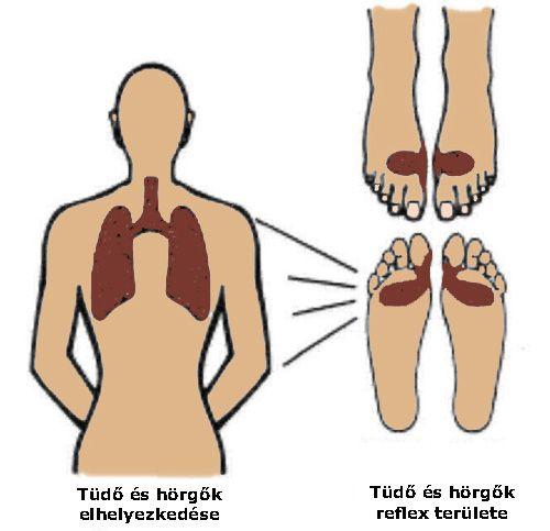 Tüdőgyulladás láz nélkül